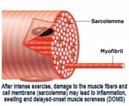 muscles damage